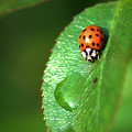 Ladybird by Chris Day