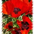 Ladybird Poppy by Veron Miller