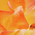 Ladybug Alights by Diana Weir