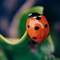 Ladybug by Paul Gibson
