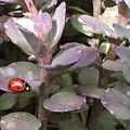 Ladybug Garden by Karen Jones