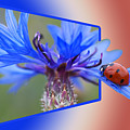 Ladybug On The Cornflower by Ericamaxine Price