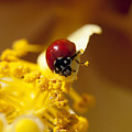 Ladybug Picking Flowers by Diana Haronis
