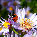 Ladybug Shows Her Heart by Roger Medbery