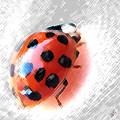 Ladybug Spectacular by Ben and Raisa Gertsberg