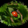 Ladybug With Swirly Framing by Carol Groenen