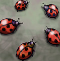 Ladybugs by Kevin Middleton