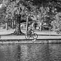 Lafreniere Park 3 - Bw by Steve Harrington