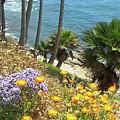 Laguna Beach, Southern California 12 by Larysa Kalynovska