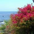 Laguna Beach, Southern California 3 by Larysa Kalynovska