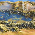 Laguna Beach Tide Pool Pattern 3 by Scott Campbell