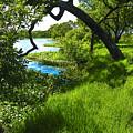 Laguna De Santa Rosa by John S Lushenko