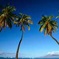 Lahaina, Five Coconut Tre by Carl Shaneff - Printscapes