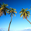 Lahaina Palms by Carl Shaneff - Printscapes