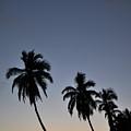 Lahaina Sunset by Kelly Wade