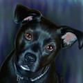 Laila In Blue by Becky Herrera