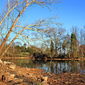 Lake And Trees In Early Spring by Todd Blanchard