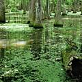 Lake Chicot by Nicholas Blackwell