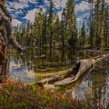 Lake Eleanor by Michele James