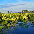 Pointe Mouilee Lake Erie by Michael Rucker