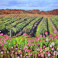 Lake Erie Vineyard-fall Colors by Anne Cameron Cutri