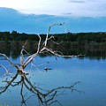 Lake Fryer Tree by Val Conrad