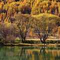 Lake In Autumn - 3 - French Alps by Paul MAURICE