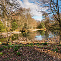 Lake In Early Springtime Woodland by David Head
