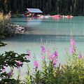 Lake Louise Wildflowers And Boathouse by Carol Groenen