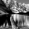 Lake Moraine Drift Wood by David Matthews