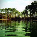 Lake Murray Trees by Janele Wilson