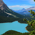 Lake Peyto Banff National Park Alberta Canada by Ola Allen
