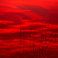 Lake Reeds And Red Sunset by Irwin Barrett