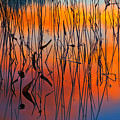 Lake Reeds And Sunset Colors by Irwin Barrett