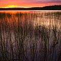 Lake Reeds At Sundown by Irwin Barrett