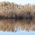 Lake Reflexion by Sergi Padilla