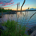 Lake Sunset And Sedge Grass Silhouettes, Pocono Mountains by A Gurmankin