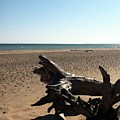 Lake Superior Driftwood by Michelle Calkins