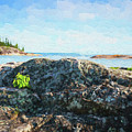 Lake Superior North Shore Rocks by Les Palenik