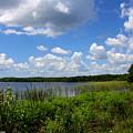 Lake Tarpon by Barbara Bowen