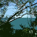 Lake Through The Trees by Michelle Calkins