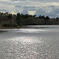 Lake Waccamaw II by Suzanne Gaff