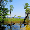 Lake Waccamaw Nc by Joshua Bales