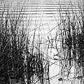 Lake Wake by Francesa Miller