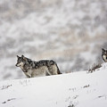 Lamar Valley Pack by Jim Chagares
