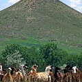 Lamas by George Tuffy