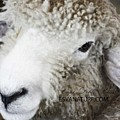 Lamb by Captain Debbie Ritter