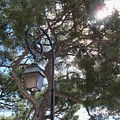 Lamp And Tree by Katie Beougher