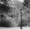 Lamp Post In Winter - B/w by William Selander