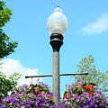 Lamp Post by Kathleen Struckle
